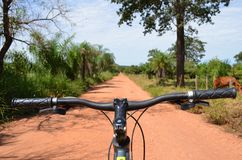 Manubrio del mountain bike a Dusty Jungle Road, Pantanal, Brasile immagini stock