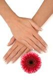 Manucure Image libre de droits