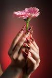 Manucure de belles mains avec une fleur Photographie stock
