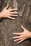Manucure française sur un fond d'un bark-2 Images libres de droits
