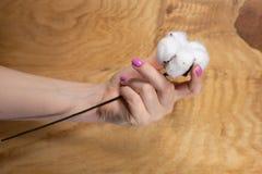 Manucure sensible à la mode de ressort Mains femelles avec la conception de clou photographie stock libre de droits
