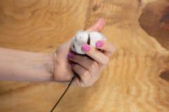 Manucure sensible à la mode de ressort Mains femelles avec la conception de clou image stock
