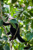 Manuel Antonio National Park Royalty Free Stock Images