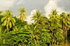 Manuel Antonio tropical beach - Costa Rica Royalty Free Stock Photos