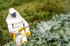 Manuell bekämpningsmedelsprejare i grönsallat fotografering för bildbyråer