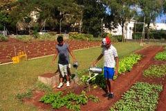 Manuelle Bewässerung stockfotos