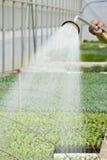 Manuelle Bewässerung Lizenzfreies Stockbild
