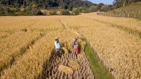 Manueller Landwirt Harvest eigenhändig stockbilder