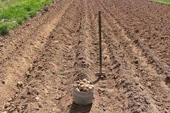 Manuellt plantera av potatisar royaltyfri foto
