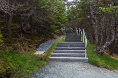 Manuels River walking trail. Steps, Conception Bay South, Newfoundland and Labrador, Canada stock photo
