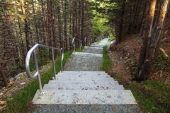 Manuels River walking trail. Steps, Conception Bay South, Newfoundland and Labrador, Canada royalty free stock images