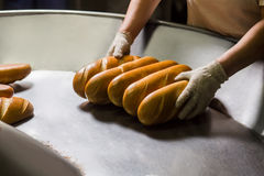 Manufacture of bakery products. Stock Images