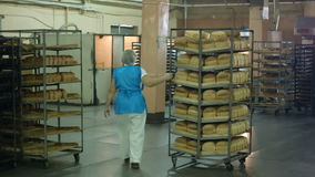 Manufacture of bread products, the employee pushes a rack with a fresh ready to sell bread.  stock video footage