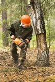 Forest inspectors work in the forest. Manufacture of the index of the direction of sanitary felling of wood in the Siberian taiga by a chainsaw. Man cuts tree Royalty Free Stock Image