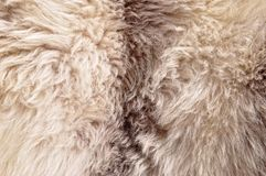 The manufactured skin of a sheep Royalty Free Stock Photography