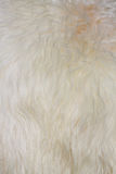 The manufactured skin of a sheep Royalty Free Stock Photo