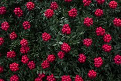 Manufacturer of Christmas plant decor. Christmas wreath for the holiday. The new year celebration. Top view stock images
