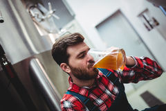 Manufacturer drinking beer at brewery Stock Photos