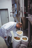 Manufacturer examining barley at brewery Stock Photos