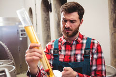 Manufacturer examining beer at brewery Stock Image