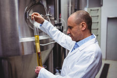 Manufacturer examining beer at brewery Royalty Free Stock Images