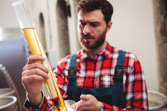 Manufacturer examining beer in test tube Royalty Free Stock Image