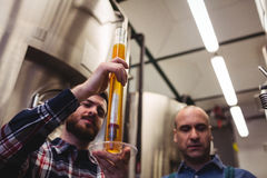 Manufacturer examining beer in tube at brewery. Low angle view of manufacturer examining beer in tube at brewery Royalty Free Stock Photography