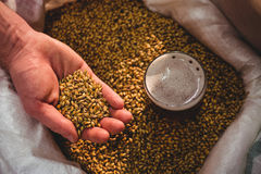 Manufacturer showing barley in sack at brewery Royalty Free Stock Photos