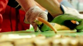 Manufaktura karmel cukierki, zbliżenie robić długim cukierkom zdjęcie wideo