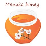 Manuka honey and A brunch of manuka blooming and a bee Royalty Free Stock Photo