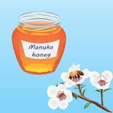 Manuka honey and A brunch of manuka blooming and a bee Stock Photos