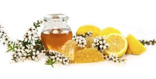 Manuka honey & lemons. Manuka honey in a glass jar with manuka tree flowers, lemons and honeycomb isolated on white stock images