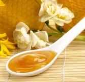 Manuka honung i en sked royaltyfri fotografi