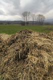 Manure Stock Photos