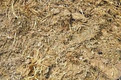 Manure. Detail of manure, fertilizer for plants Stock Photos