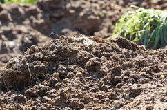 Free Manure Stock Images - 41329424