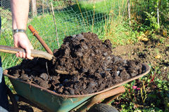 Manure being shovelled from a wheelbarrow closeup. Royalty Free Stock Photos