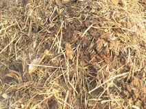 Manure composting. Close up of manure composting Royalty Free Stock Photo