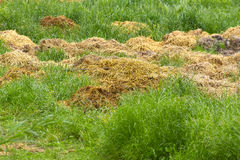 Manure Stock Images