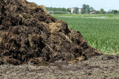 Manure for fertilizer Stock Images