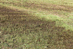 Manure on the field Royalty Free Stock Photography