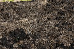 Free Manure From Cattle Royalty Free Stock Photo - 121820805