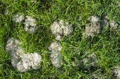 Manure in grass Stock Photos
