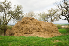 Manure Heap. Stable manure heap in spring stock photo