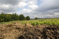 Manure heap. A manure heap in front of a corn field under a cloudy sky stock photography