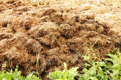 Manure heap Royalty Free Stock Photography