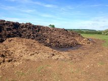 Manure heap in a field. Royalty Free Stock Image