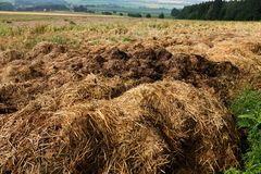Manure heap Royalty Free Stock Photos