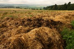 Manure heap. A manure heap beside a harvested field under a cloudy sky stock photography