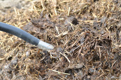 Manure mixed with hay Stock Image